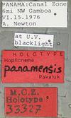 http://mczbase.mcz.harvard.edu/specimen_images/entomology/large/MCZ-ENT00033327_Hoplicnema_panamensis_lbs.jpg