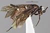 http://mczbase.mcz.harvard.edu/specimen_images/entomology/large/MCZ-ENT00033391_Haplostegus_dorius_hal.jpg