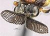 http://mczbase.mcz.harvard.edu/specimen_images/entomology/large/MCZ-ENT00033392_Perreyiella_wanata_hef.jpg
