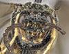 http://mczbase.mcz.harvard.edu/specimen_images/entomology/large/MCZ-ENT00033393_Lagideus_luticus_hef.jpg