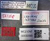 http://mczbase.mcz.harvard.edu/specimen_images/entomology/large/MCZ-ENT00033393_Lagideus_luticus_lbs.jpg