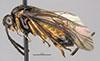 http://mczbase.mcz.harvard.edu/specimen_images/entomology/large/MCZ-ENT00033395_Aulacomerus_waquus_hal.jpg