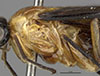 http://mczbase.mcz.harvard.edu/specimen_images/entomology/large/MCZ-ENT00033396_Aulacomerus_quivus_thl.jpg