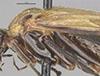 http://mczbase.mcz.harvard.edu/specimen_images/entomology/large/MCZ-ENT00033397_Aulacomerus_pullus_thl.jpg