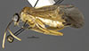 http://mczbase.mcz.harvard.edu/specimen_images/entomology/large/MCZ-ENT00033398_Aulacomerus_apicalis_hal.jpg