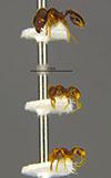 Media of type image, MCZ:Ent:34412 Identified as Pheidole verricula type status Holotype of Pheidole verricula. . Aspect: habitus lateral view