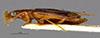 http://mczbase.mcz.harvard.edu/specimen_images/entomology/large/MCZ-ENT00034673_Dromius_hilaris_hal.jpg