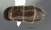 http://mczbase.mcz.harvard.edu/specimen_images/entomology/large/MCZ-ENT00034774_Azteca_petalocephala_bop.jpg