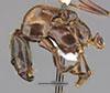 http://mczbase.mcz.harvard.edu/specimen_images/entomology/large/MCZ-ENT00034774_Azteca_petalocephala_hal.jpg
