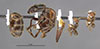 http://mczbase.mcz.harvard.edu/specimen_images/entomology/large/MCZ-ENT00034774_Azteca_petalocephala_hala.jpg