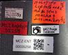 http://mczbase.mcz.harvard.edu/specimen_images/entomology/large/MCZ-ENT00035258_Leptothorax_adustus_lbs.jpg