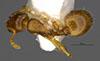 http://mczbase.mcz.harvard.edu/specimen_images/entomology/large/MCZ-ENT00035272_Leptothorax_melinus_had.jpg