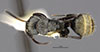 http://mczbase.mcz.harvard.edu/specimen_images/entomology/large/MCZ-ENT00035555_Camponotus_flavicomans_had.jpg