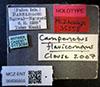 http://mczbase.mcz.harvard.edu/specimen_images/entomology/large/MCZ-ENT00035555_Camponotus_flavicomans_lbs.jpg
