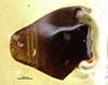 http://mczbase.mcz.harvard.edu/specimen_images/entomology/large/MCZ-ENT00035593_Theognete_michaudi_bop.jpg
