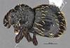 http://mczbase.mcz.harvard.edu/specimen_images/entomology/large/MCZ-ENT00035593_Theognete_michaudi_had.jpg
