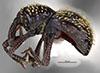 http://mczbase.mcz.harvard.edu/specimen_images/entomology/large/MCZ-ENT00035595_Theognete_broadheadae_hal.jpg