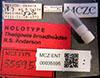 http://mczbase.mcz.harvard.edu/specimen_images/entomology/large/MCZ-ENT00035595_Theognete_broadheadae_lbs.jpg