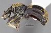 http://mczbase.mcz.harvard.edu/specimen_images/entomology/large/MCZ-ENT00035596_Theognete_gaia_hal.jpg