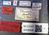 http://mczbase.mcz.harvard.edu/specimen_images/entomology/large/MCZ-ENT00035626_Pheidole_hyatti_lbs.jpg