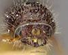 http://mczbase.mcz.harvard.edu/specimen_images/entomology/large/MCZ-ENT00035805_Pityogenes_lecontei_hef.jpg