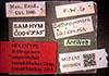 http://mczbase.mcz.harvard.edu/specimen_images/entomology/large/MCZ-ENT00035824_Bothroponera_umgodikulula_lbsa.jpg