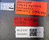 http://mczbase.mcz.harvard.edu/specimen_images/entomology/large/MCZ-ENT00035831_Trachymyrmex_carinatus_lbs.jpg
