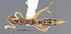 http://mczbase.mcz.harvard.edu/specimen_images/entomology/large/MCZ-ENT00035864_Leptogenys_gorgona_had.jpg