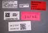 Media of type image, MCZ:Ent:36162 Identified as Pheidole cusuco type status Holotype of Pheidole cusuco. . Aspect: labels