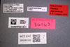 Media of type image, MCZ:Ent:36163 Identified as Pheidole depressinoda type status Holotype of Pheidole depressinoda. . Aspect: labels