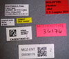 Media of type image, MCZ:Ent:36176 Identified as Pheidole tikal type status Holotype of Pheidole tikal. . Aspect: labels