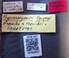 http://mczbase.mcz.harvard.edu/specimen_images/entomology/large/MCZ-ENT00566607_Pogonomyrmex_texanus_lbs.jpg