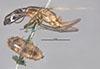 http://mczbase.mcz.harvard.edu/specimen_images/entomology/large/MCZ-ENT00649870_Camponotus_mirabilis_hal.jpg