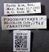 http://mczbase.mcz.harvard.edu/specimen_images/entomology/large/MCZ-ENT00673658_Pogonomyrmex_bicolor_lbs.jpg