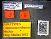 http://mczbase.mcz.harvard.edu/specimen_images/entomology/large/MCZ-ENT00712534_Camponotus_reburrus_lbs.jpg