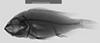 http://mczbase.mcz.harvard.edu/specimen_images/fish/large/134514_Neochromis_Kiryowa_A_x.jpg