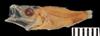http://mczbase.mcz.harvard.edu/specimen_images/fish/large/149632_a_Microichthys_coccoi.jpg