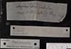 http://mczbase.mcz.harvard.edu/specimen_images/fish/large/157903_Astyanax_fasciatus_parahybae_PLT_label.jpg
