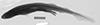 http://mczbase.mcz.harvard.edu/specimen_images/fish/large/61163_2_Scylliorhinus_X_.jpg