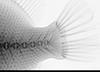 http://mczbase.mcz.harvard.edu/specimen_images/fish/large/86697_Canthidermis_sufflamen_c_X.jpg