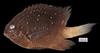 http://mczbase.mcz.harvard.edu/specimen_images/fish/large/MCZ172589.jpg
