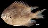 http://mczbase.mcz.harvard.edu/specimen_images/fish/large/MCZ172591.jpg