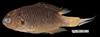 http://mczbase.mcz.harvard.edu/specimen_images/fish/large/MCZ172597.jpg