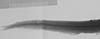http://mczbase.mcz.harvard.edu/specimen_images/fish/large/MCZ62045_Lestidium_atlanticum_d_a_X.jpg