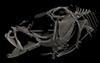 http://mczbase.mcz.harvard.edu/specimen_images/fish/large/mcz149634_microichthys_sp_3d_rec_hl.jpg