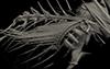 http://mczbase.mcz.harvard.edu/specimen_images/fish/large/mcz149634_microichthys_sp_3d_rec_pec3.jpg