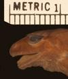 http://mczbase.mcz.harvard.edu/specimen_images/herpetology/large/A8973_E_sanctaemartae_P_hl.jpg