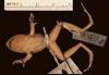 http://mczbase.mcz.harvard.edu/specimen_images/herpetology/large/A8973_E_sanctaemartae_P_v.jpg