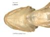 http://mczbase.mcz.harvard.edu/specimen_images/herpetology/large/A89764_A_opacum_hv.jpg