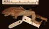 http://mczbase.mcz.harvard.edu/specimen_images/herpetology/large/A92142_L_latinasus_l.jpg